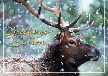 Deer Christmas Cards - Christmas Cards with Deer Greetings Boxed